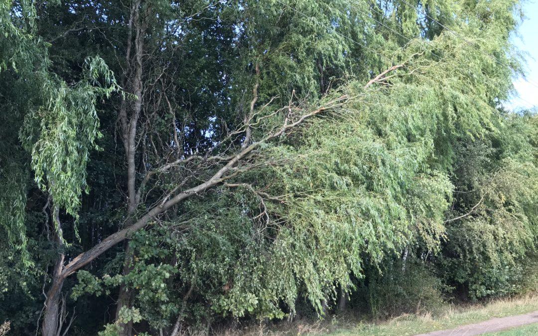 TH1 Baum